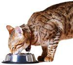Jenis Makanan Kucing dan Cara Memberi Makannya