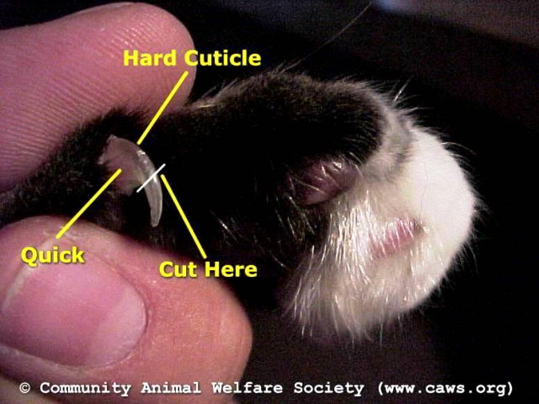 Membersihkan Dan Merapihkan Kucing Www Kucing Biz
