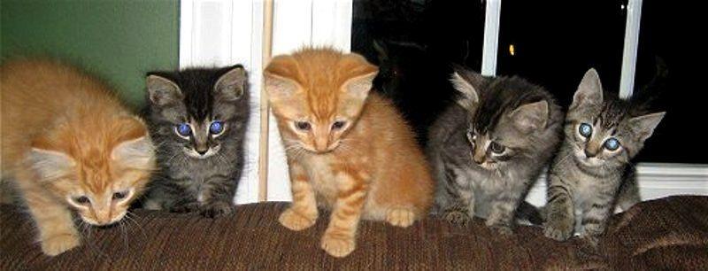 Rumah Kucing Tahapan Pertumbuhan Perkembangan Kucing