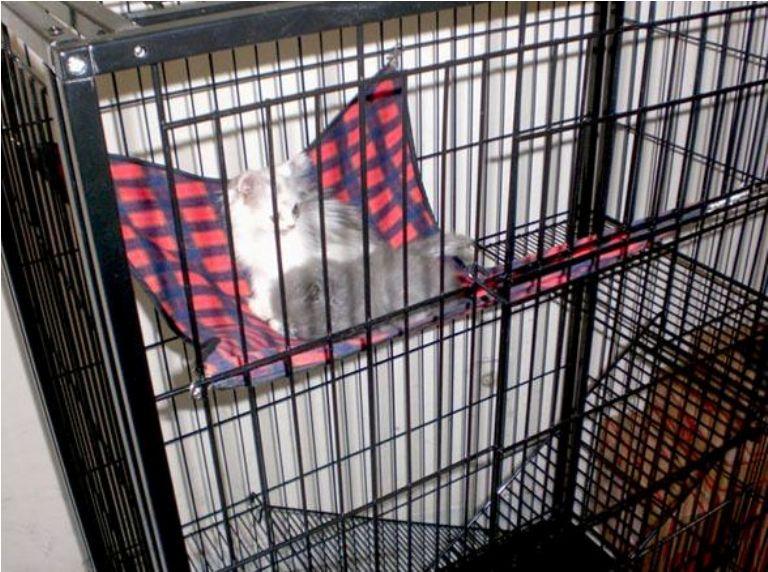 Ada desain kandang (kerangkeng) hanya untuk satu kucing bcb28a3813