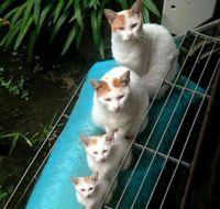 Mewariskan Warna Kucing